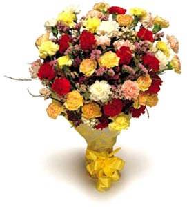 Carnations Galore