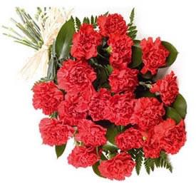 Carnations Bunch