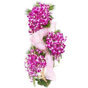 Orchids in Hight