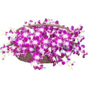 Handle Orchids Basket
