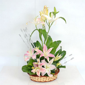 Lily Arrangement For You
