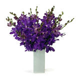 Orchids in Special vase