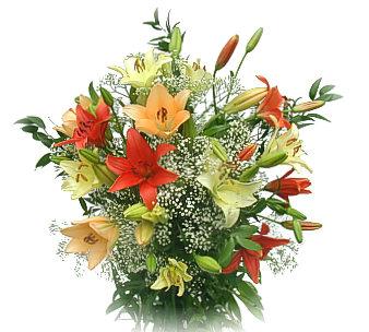 Lilies Gallary