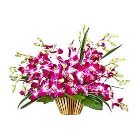 Orchids Surprised