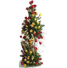 Roses in Hight
