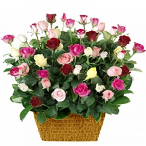 Roses color Basket